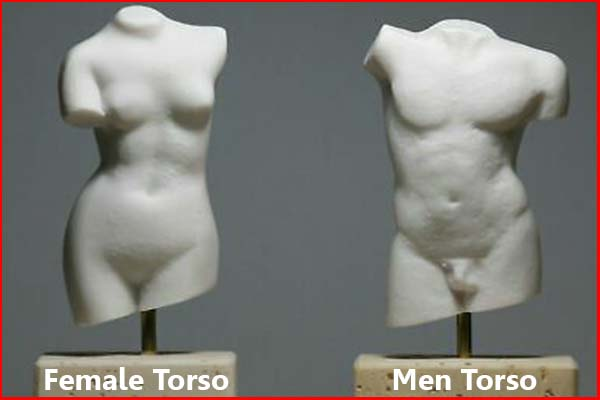 Where is your torso female and men